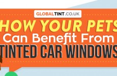 How Your Pets Can Benefit From Tinted Car Windows